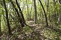 Forest in Mt.Nabeashi 04.jpg