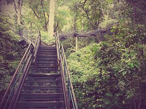 Cultural sustainability - Image: Forest view stairs in Thenmala 1