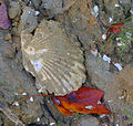 Fossil & Foliage (6280512932).jpg