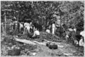 Fotg cocoa d049 cacao crop in trinidad.png