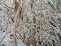 Freezing Rain in Canada 2013 4.JPG