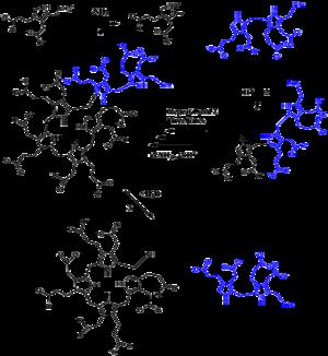 Porphobilinogen deaminase - Full PBG Deaminase Mechanism