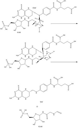 Phosphoribosylglycinamide formyltransferase - GAR transformylase water assisted mechanism suggested by Qiao et al