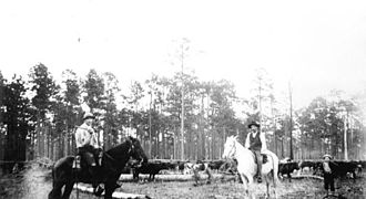 Green Cove Springs, Florida - Cowboys with cattle in Green Cove Springs (1880s).