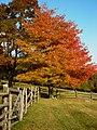 GH - Fall Foliage (3746393028).jpg