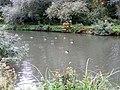GOC Sawbridgeworth 042 River Stort, Harlow (30487550025).jpg