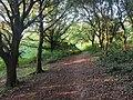 Gaer Fort Lower Woodlands.jpg