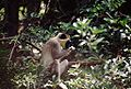 Gambia 045 from KG.jpg