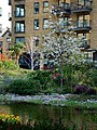 Garden on Bermondsey Wall - geograph.org.uk - 1833015.jpg