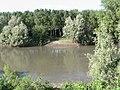 Gazzuolo - Il fiume Oglio--.JPG