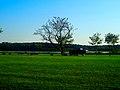 Geese in Vilas Park - panoramio (4).jpg