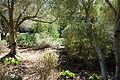 General view - Leaning Pine Arboretum - DSC05728.JPG