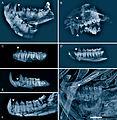 German fossil primates.jpg