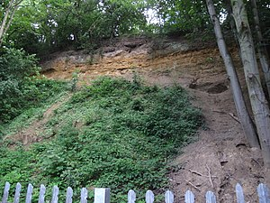 Gilbert's Pit - Paleogene succession exposed in the old quarry face. The grey sand making up the lower two-thirds of the face is the Thanet Formation, This is overlain by the yellow-brown weathering sands of the Upnor Formation (the lower part of the Lambeth Group). The overlying Woolwich Formation consists of the distinctive light grey shell bed, followed by dark grey clays. The top of the slope has the distinctive black flint pebbles of the Harwich Formation (better known locally as the Blackheath Beds)