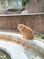 Ginger cat at Bar-Ilan University.jpg