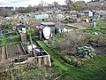Gledhow Valley Allotments 18 March 2019 6.jpg