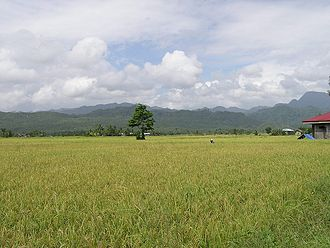 Javier, Leyte - One of the rice grainery of Poblacion
