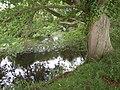 Great Western Canal near - geograph.org.uk - 1384561.jpg