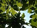 Green sky - panoramio (1).jpg