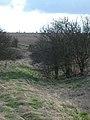 Grims Ditch - panoramio - ian freeman (2).jpg