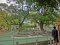 HK 佐敦 Jordan 西貢街遊樂場 Saigon Street Playground trees Jan-2014.JPG