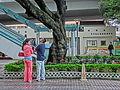 HK CWB HKCL tree 朴樹 Chinese Hackberry n escalators Nov-2013 06.JPG