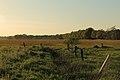 Halverde Naturschutzgebiet Kreienfeld 04.JPG