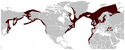 Harbour Porpoise Phocoena phocoena distribution map.png