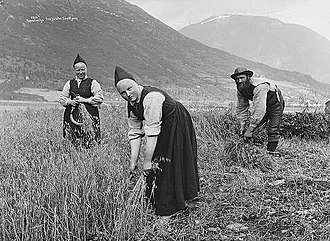Norway - Harvesting of oats in Jølster, c. 1890