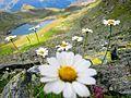 Heart Lake - Kosovo Alps.JPG