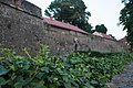 Hedera helix with city wall in background.jpg