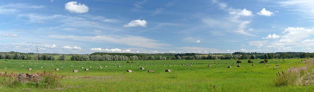 Meadow in Rihkama village