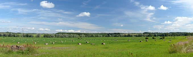 Meadow with round hay bales