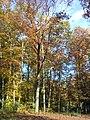 Herbst am Kuthfließ bei Eisenhüttenstadt - panoramio (4).jpg