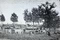 Herd of Cows Clemson 1896.png