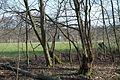 Hildener Heide 2016 128.jpg