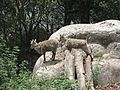 Himalayan sheep 01.jpg