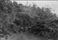 Horse-drawn wagonette on the West Coast Road, North Auckland ATLIB 334327.png