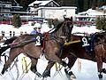 Horse (Equus ferus caballus) (4).jpg
