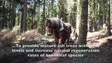 Datei:Horse Logging.webm