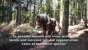 File:Horse Logging.webm