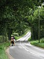 Horse riders heading SE towards Saxthorpe on Briston Road (B1354) - geograph.org.uk - 543716.jpg