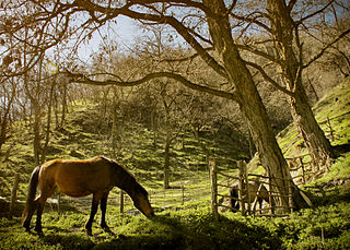 Horses in Prevalla village.jpg