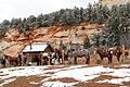 Horses outside Zion National Park (3449613690).jpg
