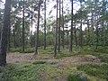 Hummelmoraberget, klapperstensvallar, 2015b.jpg