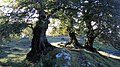 I Tre Faggi - panoramio.jpg