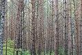 Ichalkovsky District, Mordovia, Russia - panoramio.jpg