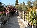 Ierusalim, Muntele Maslinilor (Gradina Ghetsimani)(10).jpg