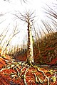Il monte Polveracchio in dicembre e lo pettacolo degli alberi.jpg