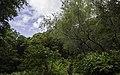 Ilha das Flores P5270242 (36010344865).jpg